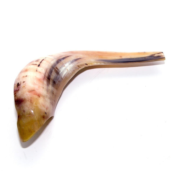 Natural Ram's Horn Shofar 30-34cm - The Peace Of God
