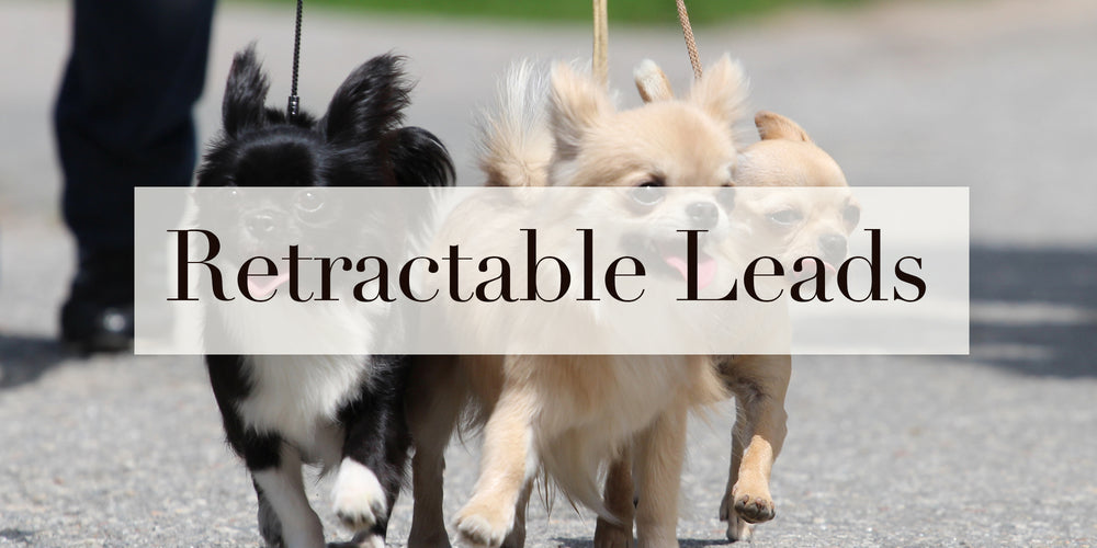 Crystal Retractable Dog Leads