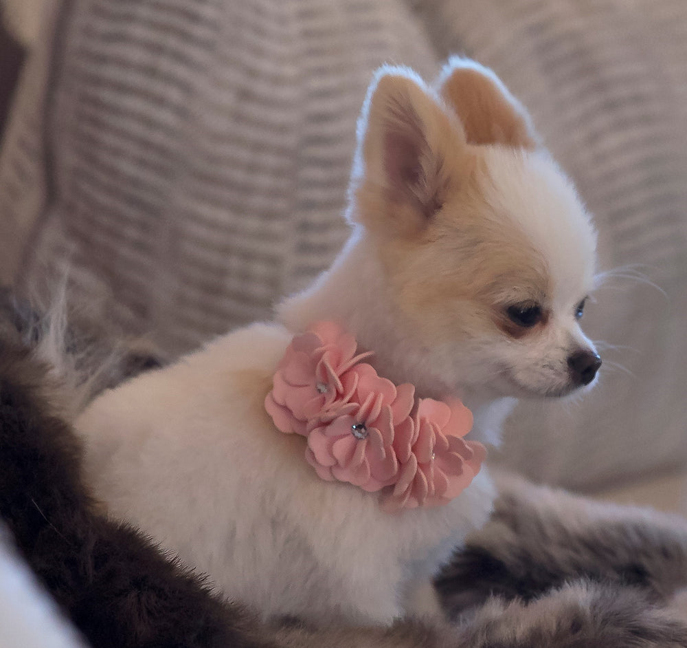 Susan Lanci Design - 'Tinkie Flowers' collar in soft puppy pink - TiaraPooches.Com