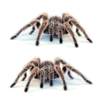 2 PCS Creative Personality Scratch Cover  Car Body Sticker(Spider Pair)