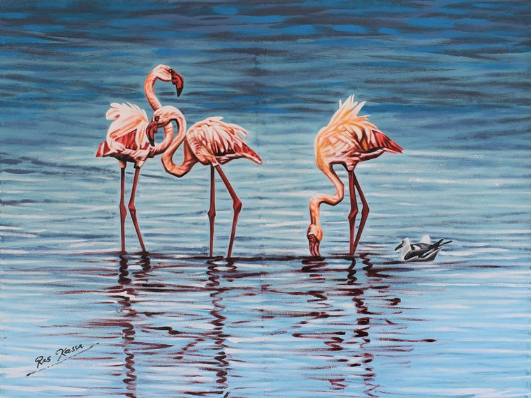 african flamingos for sale