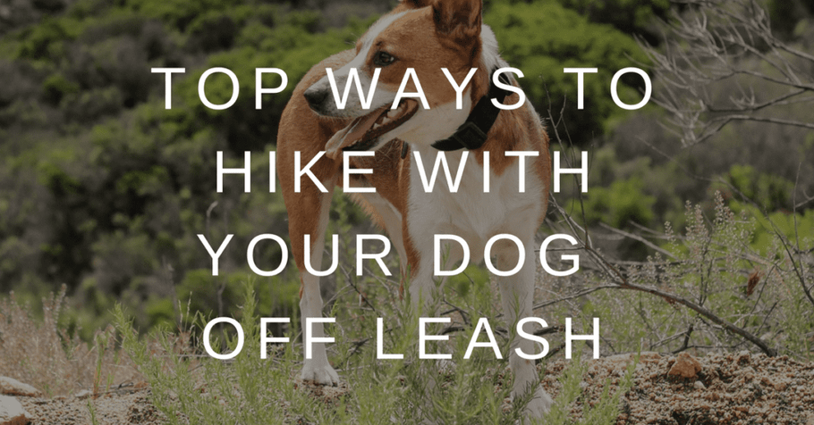 Top Ways To Hike With Your Dog Off Leash