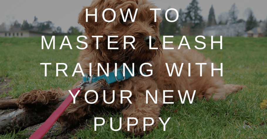 How to Master Leash Training with Your New Puppy