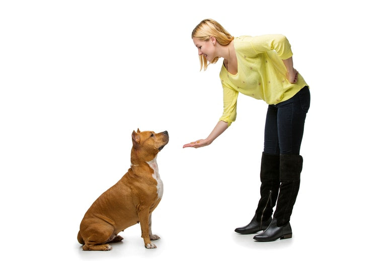 woman obedience training dog