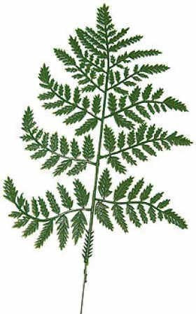 Bulk Plastic Leather Fern Leaves For Floral Arranging