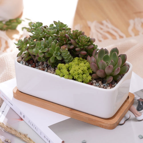 Minimalist Ceramic Planter