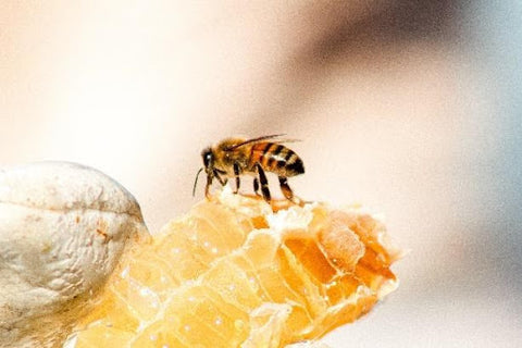 can you eat crystalized honey