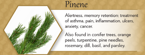 pinene terpene for cold and flu health