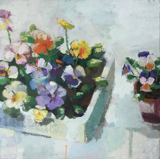 Helen Riches_potting violas