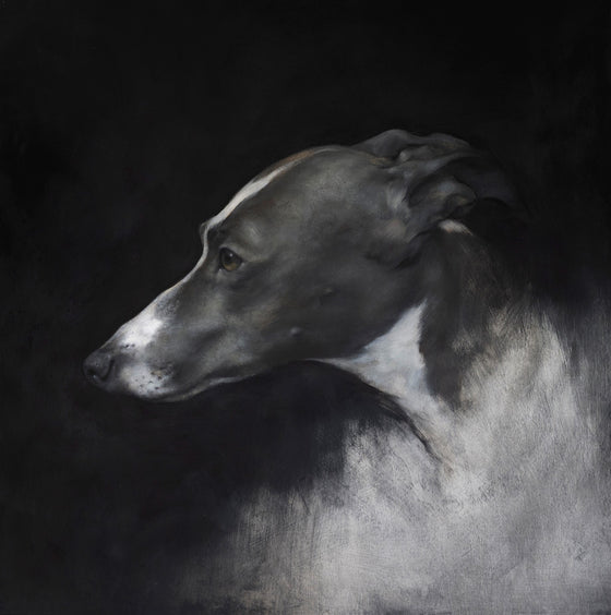 Whippet Head Study