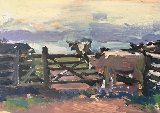 Cows at Pentire IV