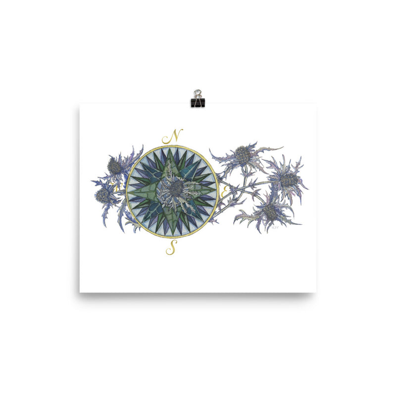 Blooming Compass: Sea Holly of the PNW - Art Print