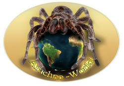 Arachno-World