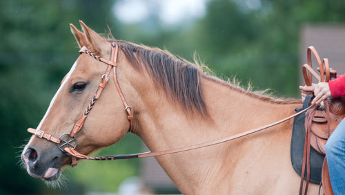 Beautiful matching braided headstall and reins are ideal for riding with a bit or bitles.