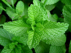 Peppermint Promotes Hair Growth