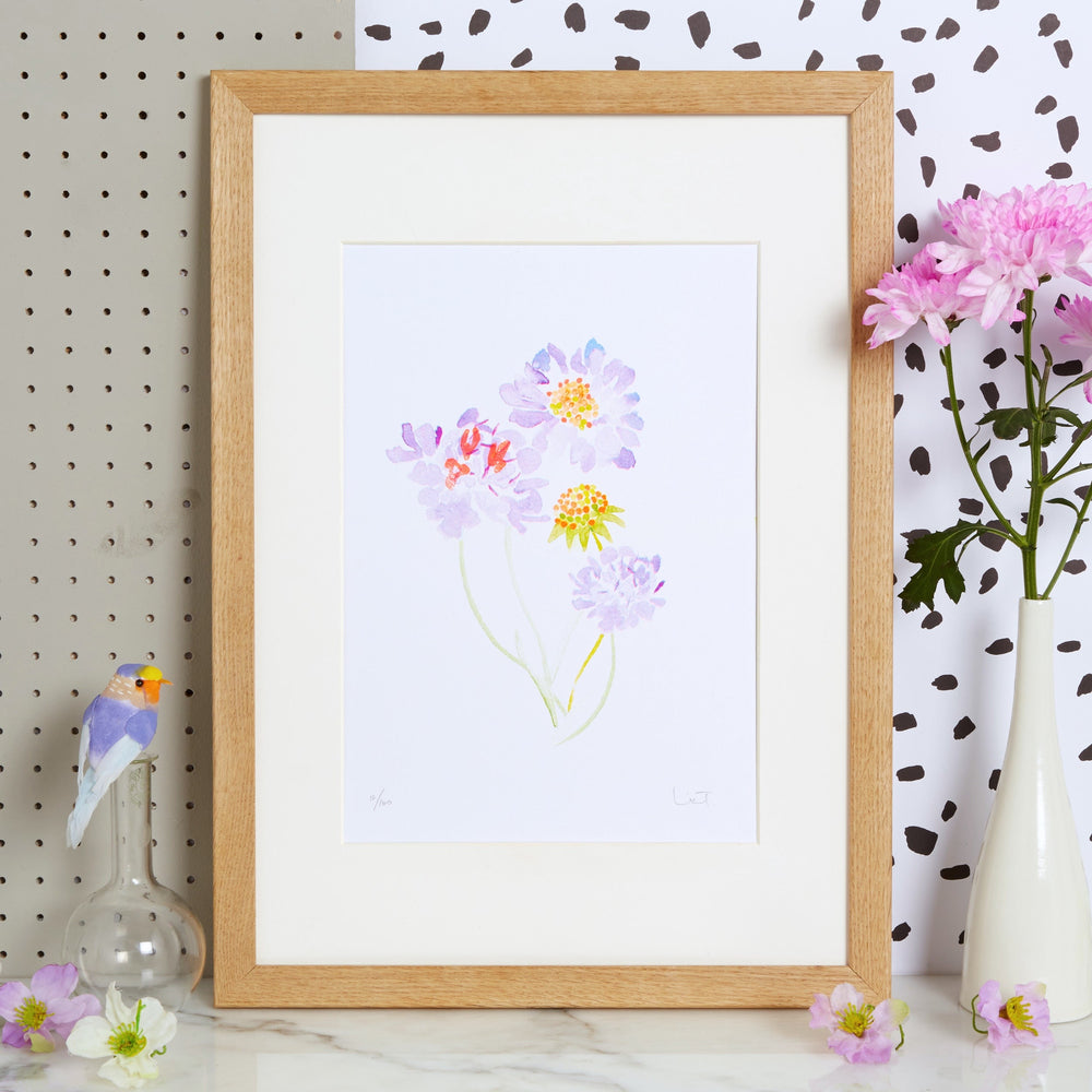 Candytuft Wildflower Art Print
