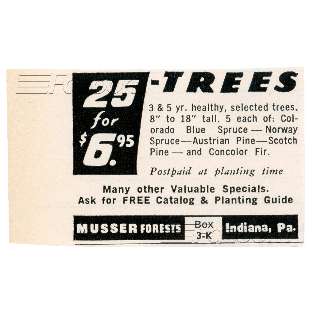 1967 25 Trees for $6.95 Vintage Ad - Fazoom