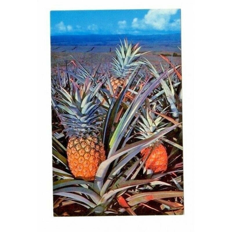 Kii Hawaii Pineapple Postcard Dexter CC-222 49802-B - Fazoom