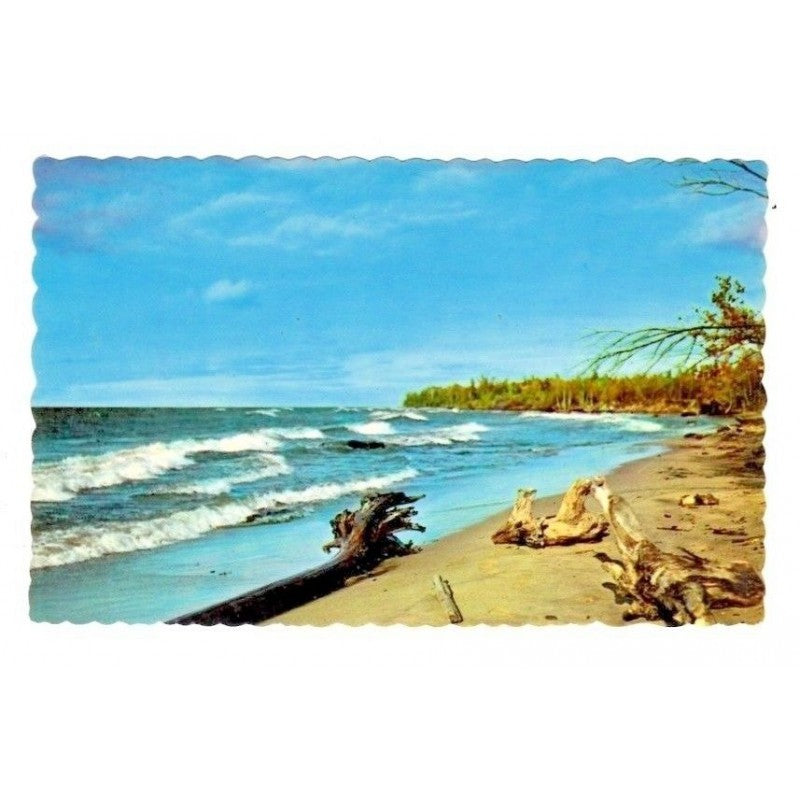 Driftwood New Hampshire Chrome USA Vintage Postcard M-1059 51250 - Fazoom