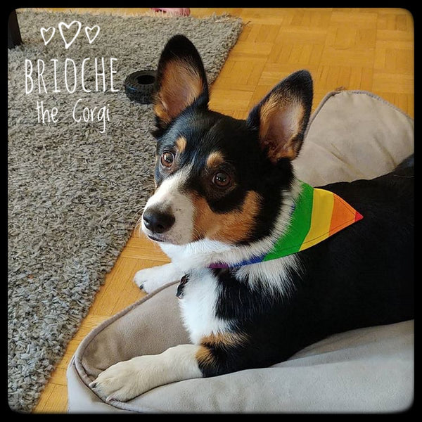 Pride Flag Pet Bandana