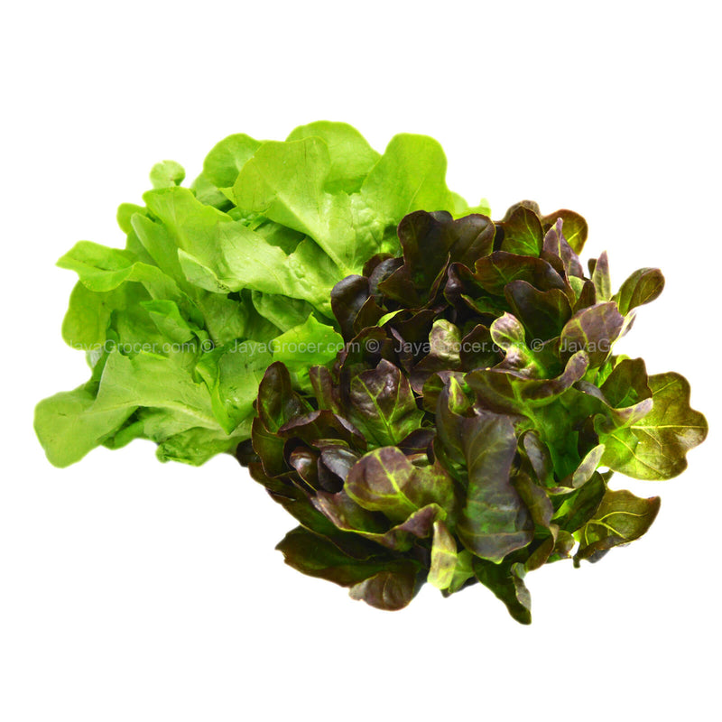 Genting Garden Red/Green Oak Leaf Lettuce 100g
