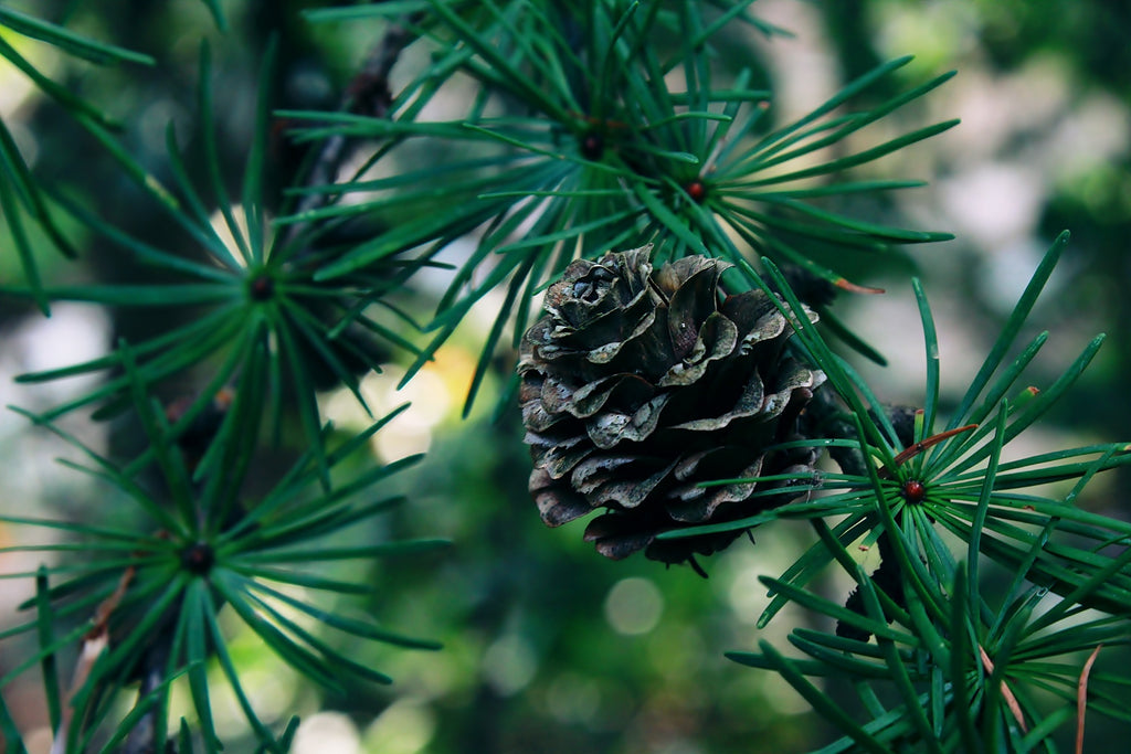 Recycling Christmas Trees and Wreaths