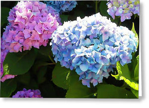Martha's Vineyard Hydrangeas - Greeting Card