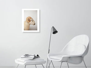 12x16 Wiltshire Ram print - Hanging Creations wall art giclée print art for sale