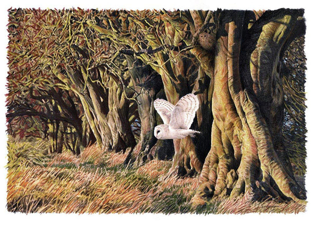 BarnBeech - Hanging Creations wall art giclée print art for sale