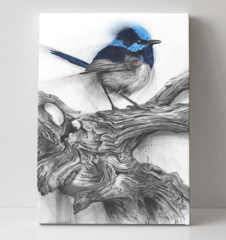 'Fairy Wren' canvas print