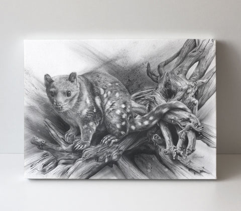 'Spotted Quoll' canvas print