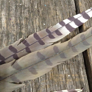"28"" Faux Feather - 2 Assorted"