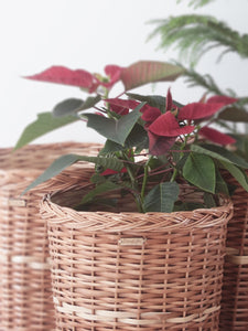 DaisyLife natural wicker planter and home decor baskets
