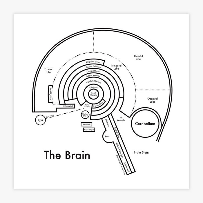 Brain Map Art Print