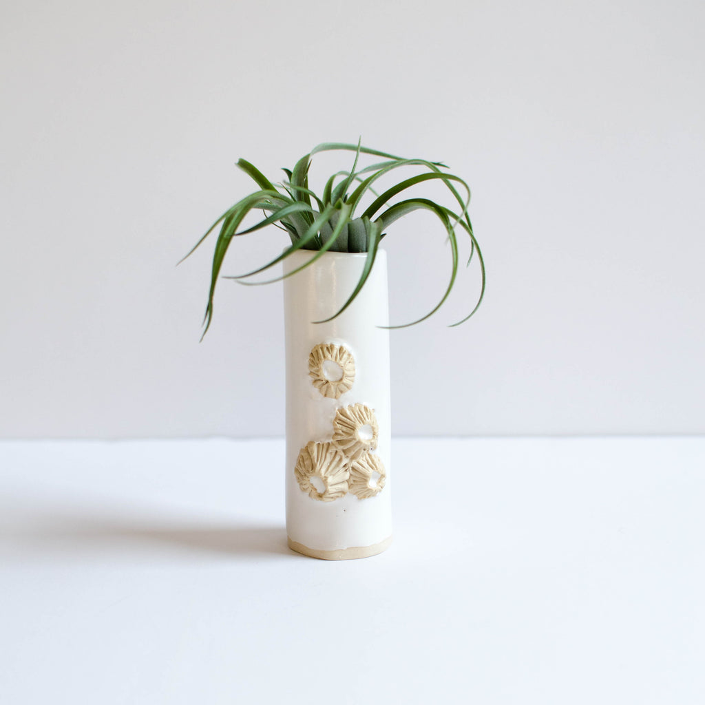 Barnacle Vases | White