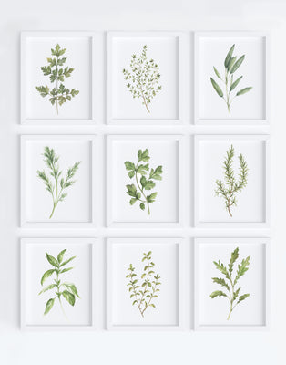 Herb Set Art Prints