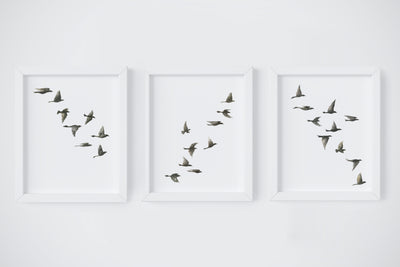 Black Birds Art Print Set
