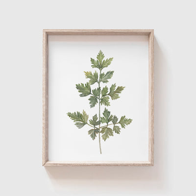 Parsley Art Print