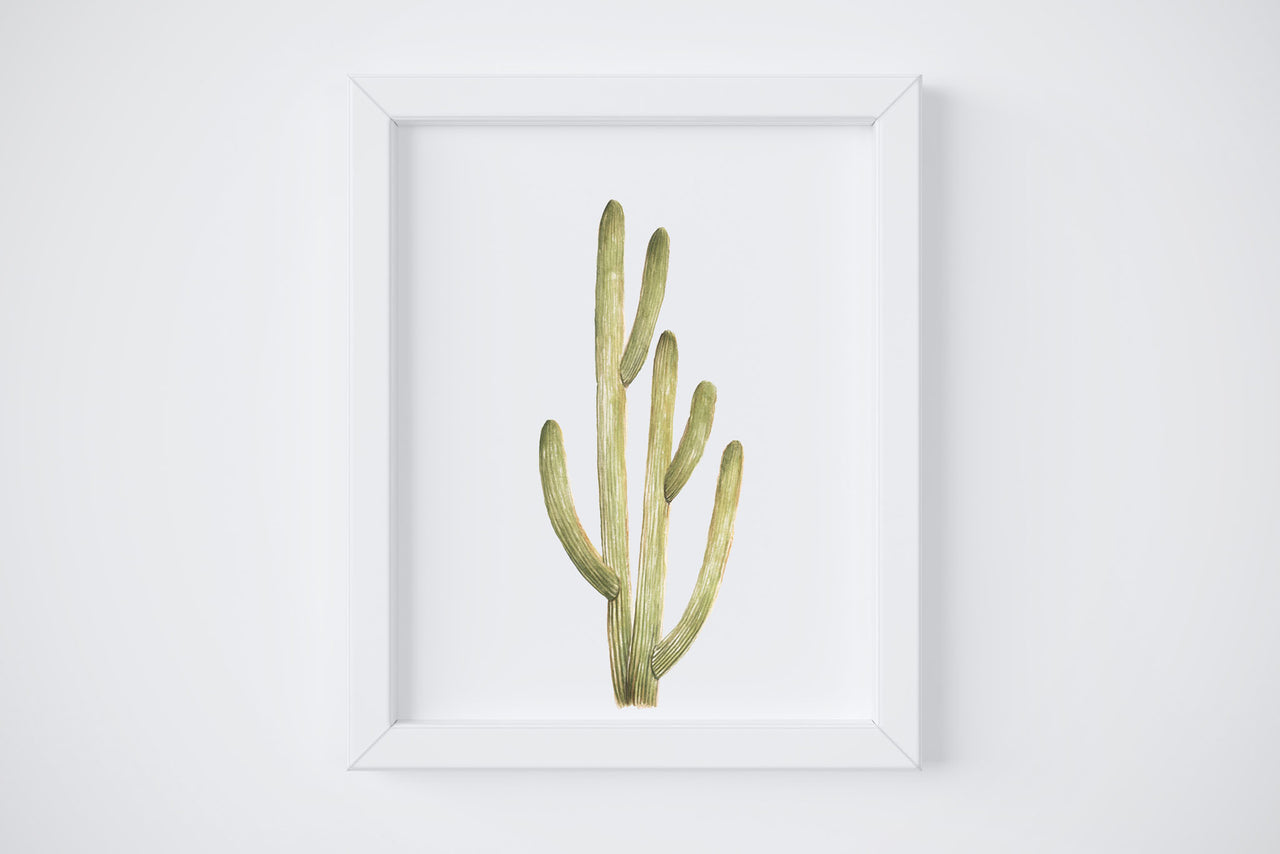 Smooth Cactus No. 1 Art Print