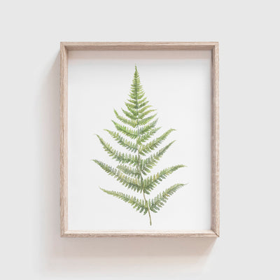 Fern No. 2 Art Print