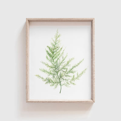 Fern No. 3 Art Print