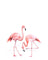 Flamingos Baby Bodysuit