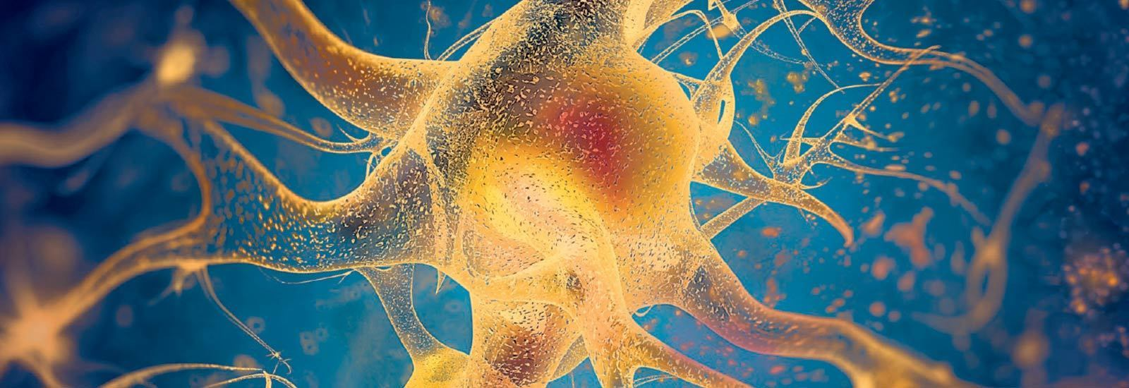 Assays for Neuronal Cell Health
