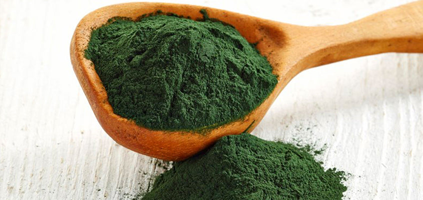 The Health Benefits Of Spirulina For Dogs