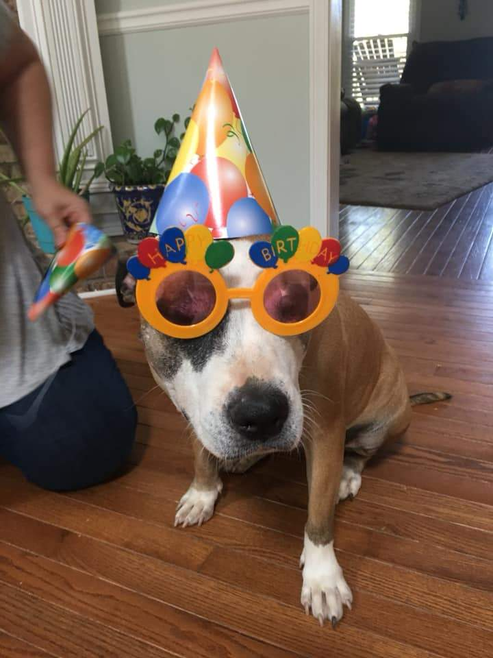 Hosting a Dog's Birthday Party