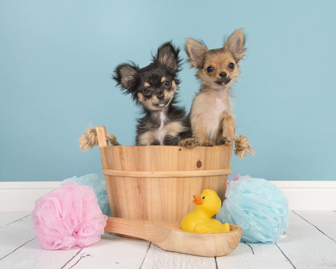 How to Set Up for an Easy Dog Bath