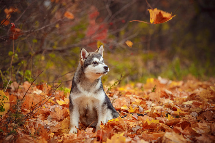 Change of Season Considerations for Your Dog