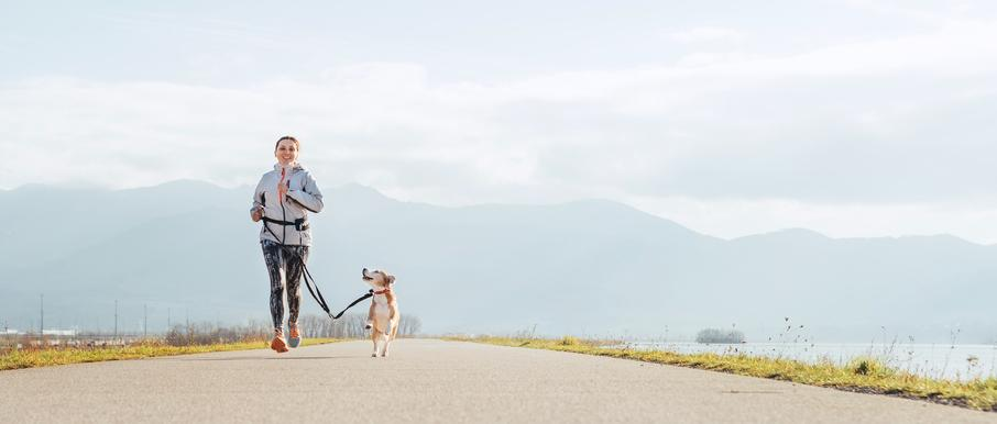 Tips on Training Your Dog to Run a Race with You