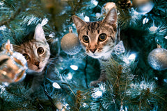 Cat-Proof Your Christmas Tree