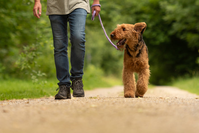 Benefits of Walking Your Dog Through Social Limitations